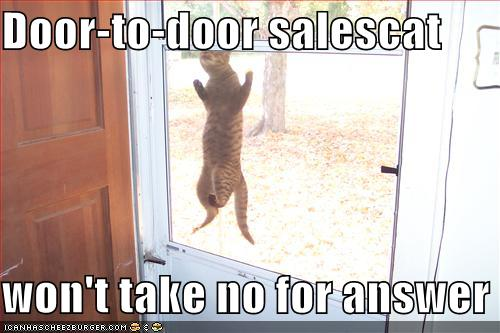 Funny-pictures-salesman-cat-will-not-take-no-for-an-answer