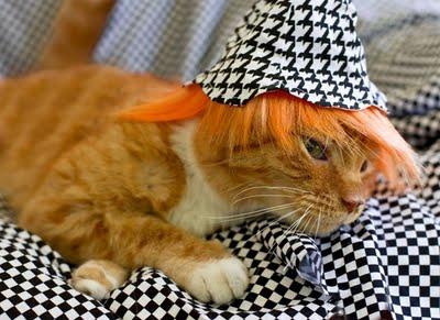 Cat_Wigs_001